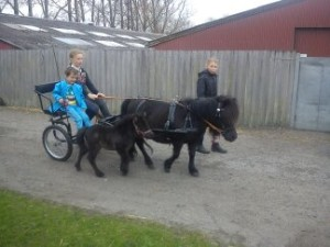 Lynghoms Salsa for vogn, med Silke Morsbøl ved siden af. Venligst udlånt af Kristine Gundelach.