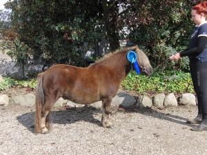 Dejligste pony 2